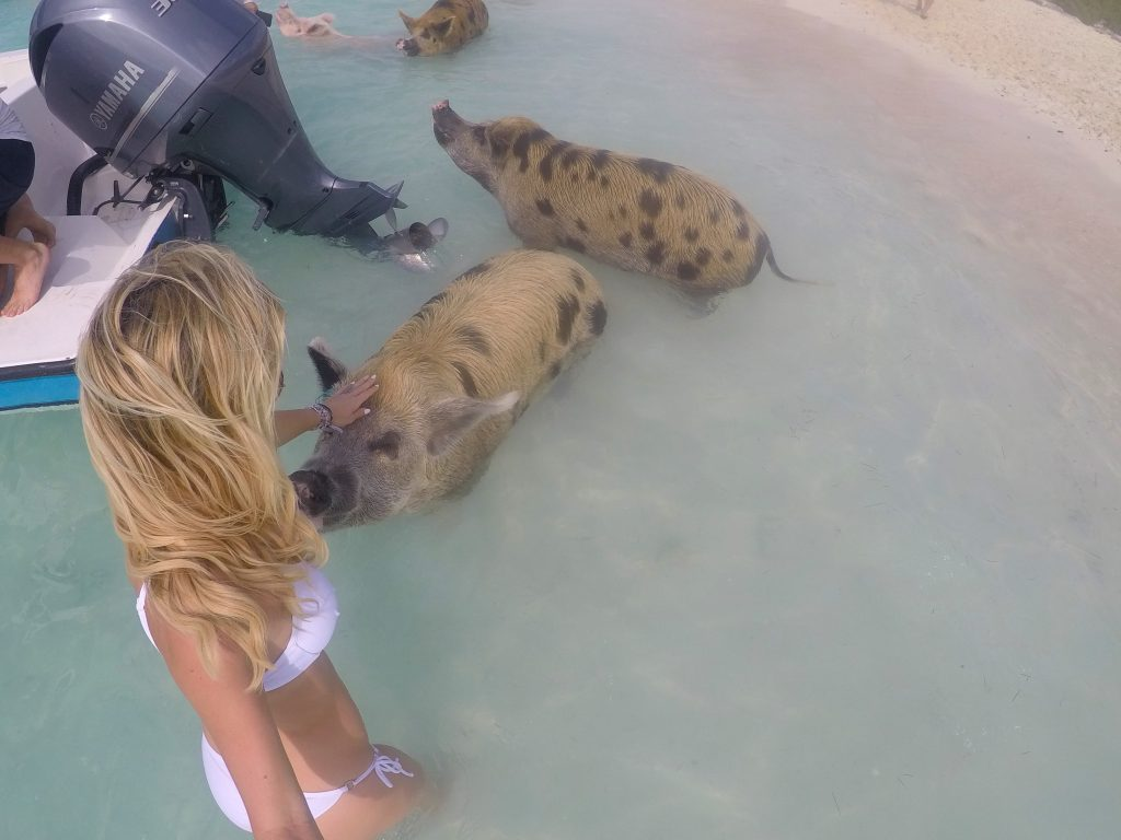 Swimming Pigs exuma bahamas mylifesamovie.com
