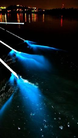 This is still photo shopped but close to what it looks like when you touch the water at night in the bio bay
