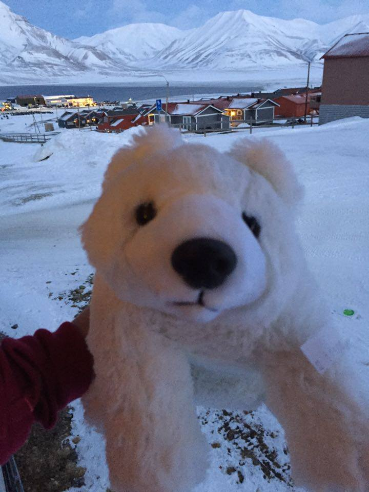 This was the only polar bear I saw unfortunately...check out that background though!