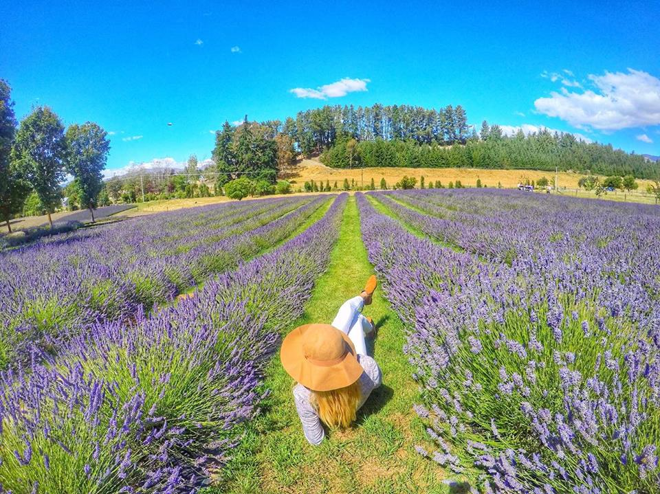 Wanaka Lavender Farm - 10 Best New Zealand Roadtrip stops - mylifesamovie.com