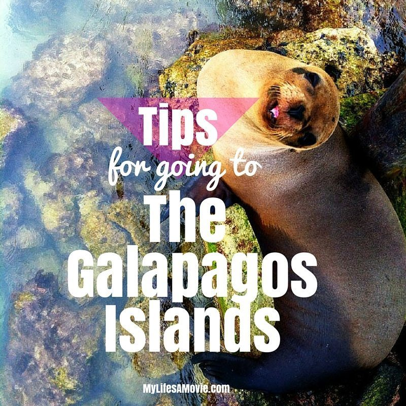 Tips for going to the Galapagos Islands