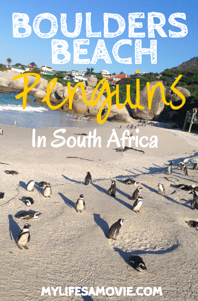 Boulders Beach Penguins in South Africa