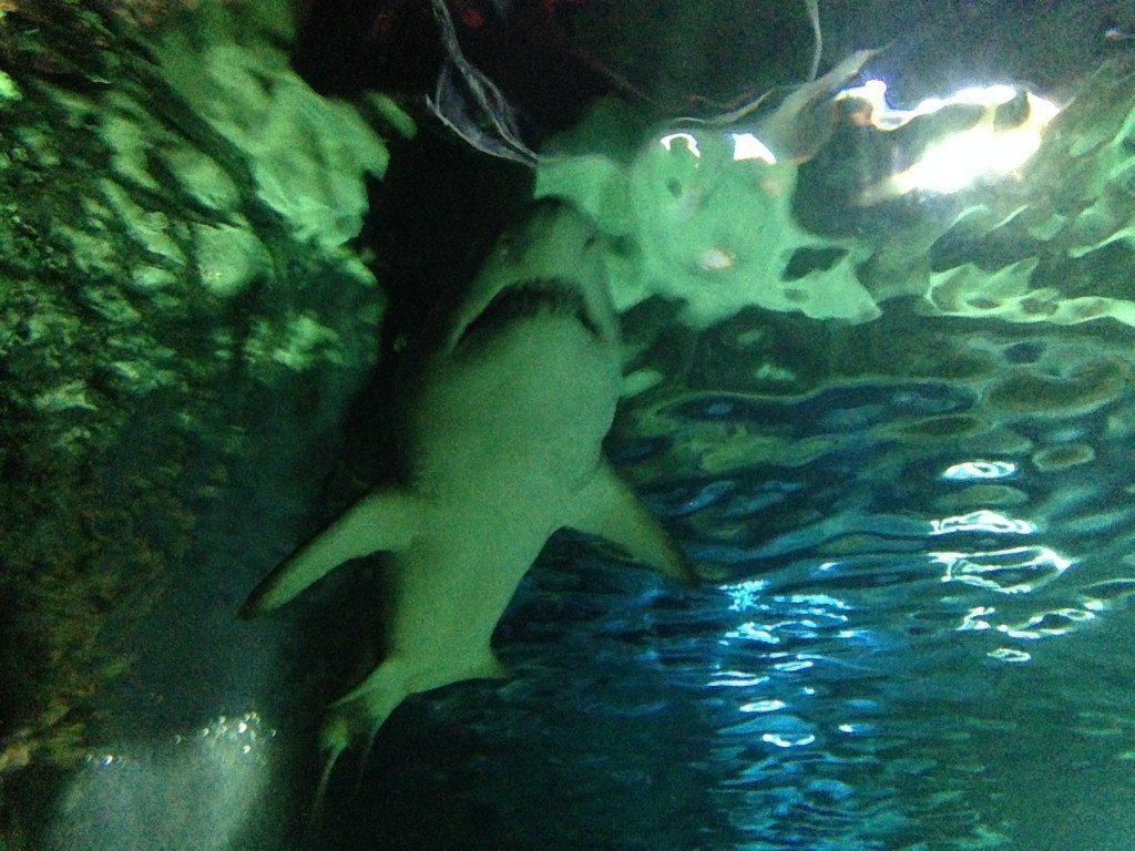 Locked Up Abroad: The Sydney Aquarium