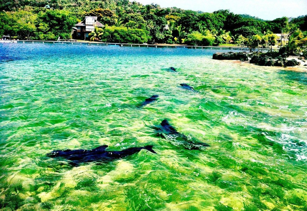 Hello Honduras Things To Do In Roatán Bay My Lifes A Movie - 10 things to see and do in honduras