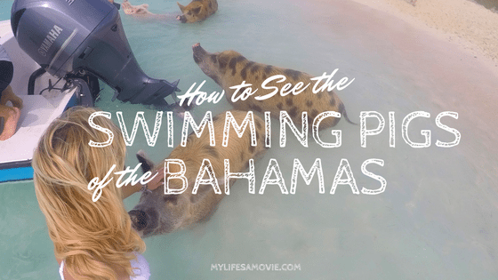 swimming-pigs-bahamas-mylifesamovie-com