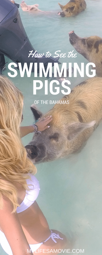 How to See the Swimming Pigs of the Bahamas!