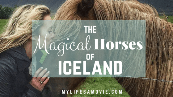 The Magical Horses of Iceland