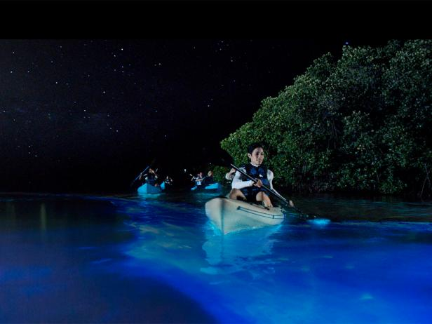 Affordable Adventures In Puerto Rico - Bioluminescent shrimp create blue rivers of light in japan