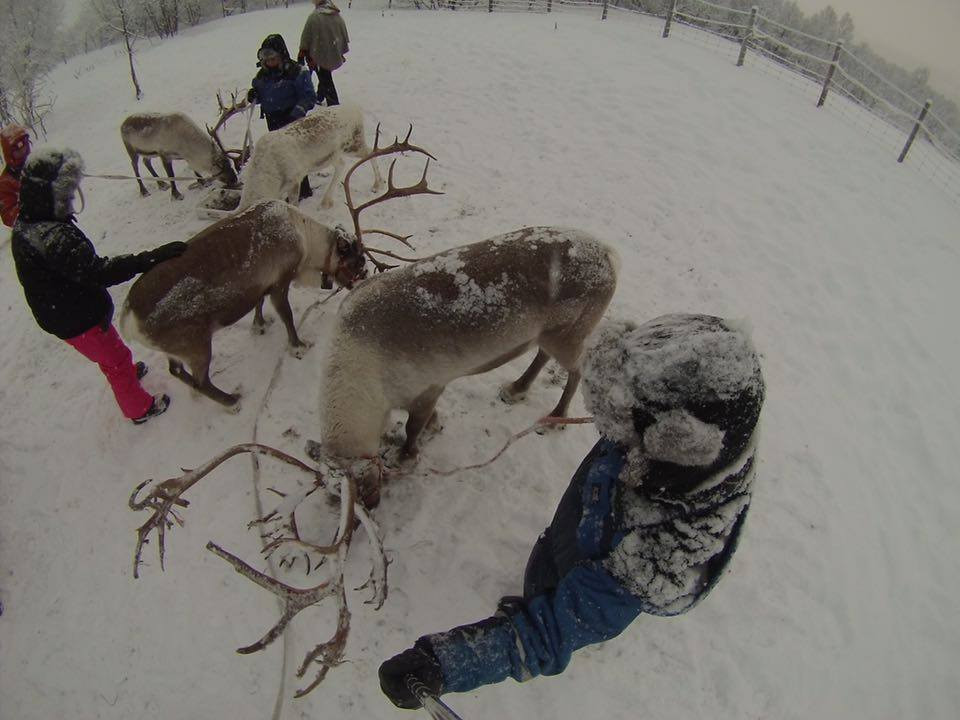 I prefer to play with the Reindeer rather than eat them, but I hear it's quite tasty!
