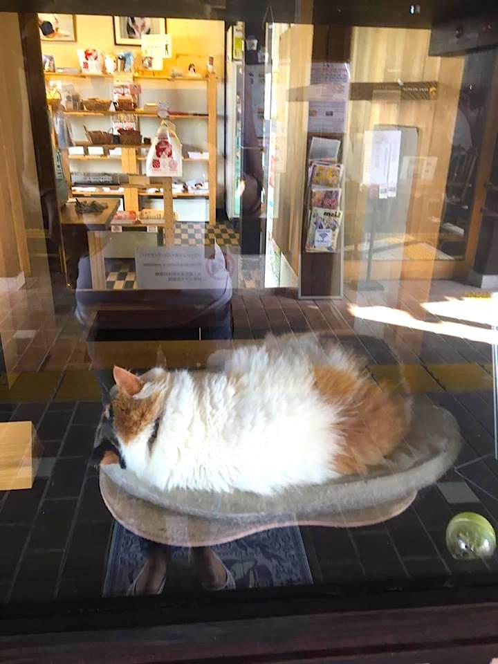 tama-cat-wakayama-mylifesamovie-com
