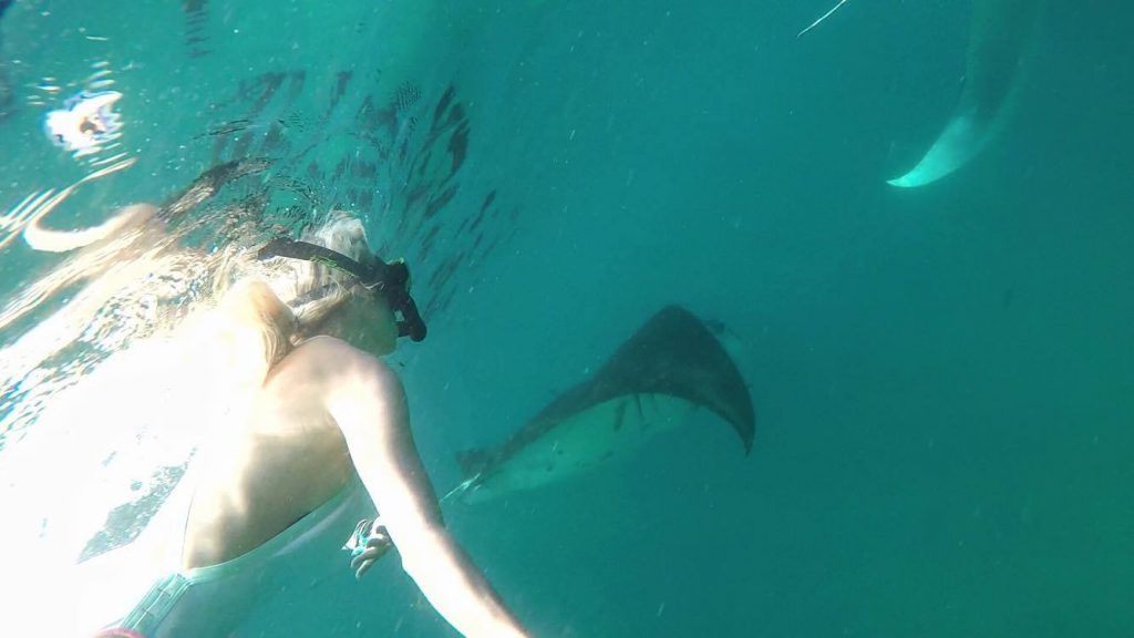 manta-rays-komodo-island-mylifseamovie-com