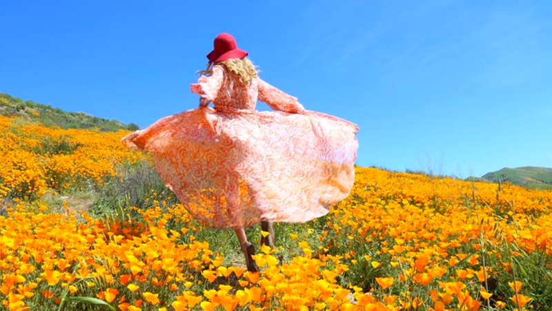 6 Best SUPER BLOOM Places to See the in California