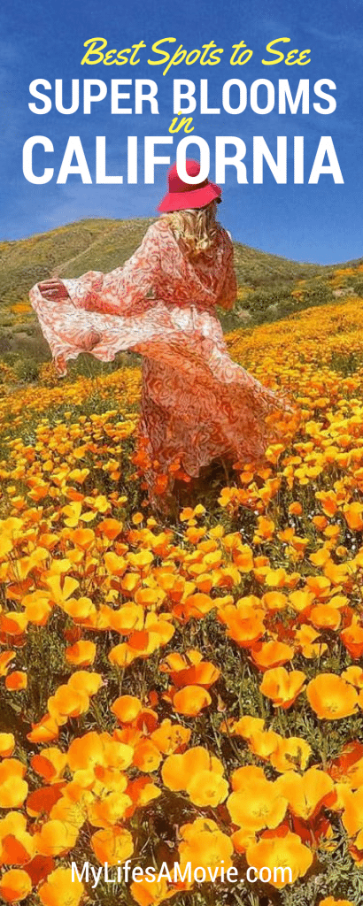 There's a massive Super Bloom happening all over California that you do not want to miss! Here's my 6 favorite Super Bloom spots, how to get to them, and camping information!