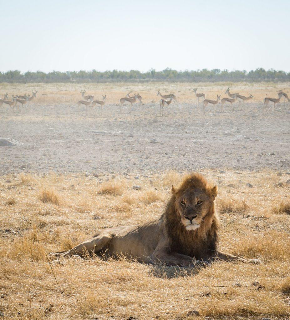 Etosha National Park Namibia mylifesamovie.com