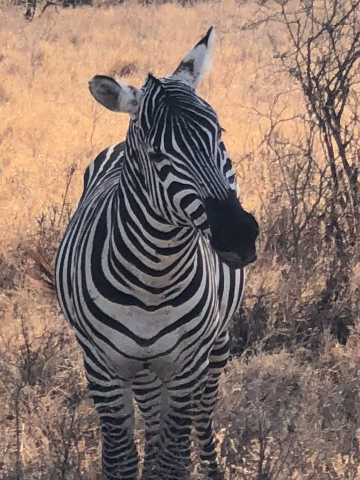Kenya safari mylifesamovie.com Alyssa Ramos