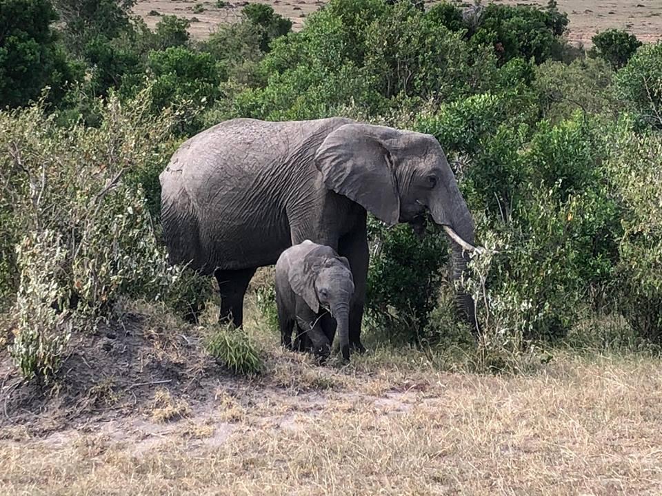 Kenya safari experience mylifesamovie.com Alyssa Ramos