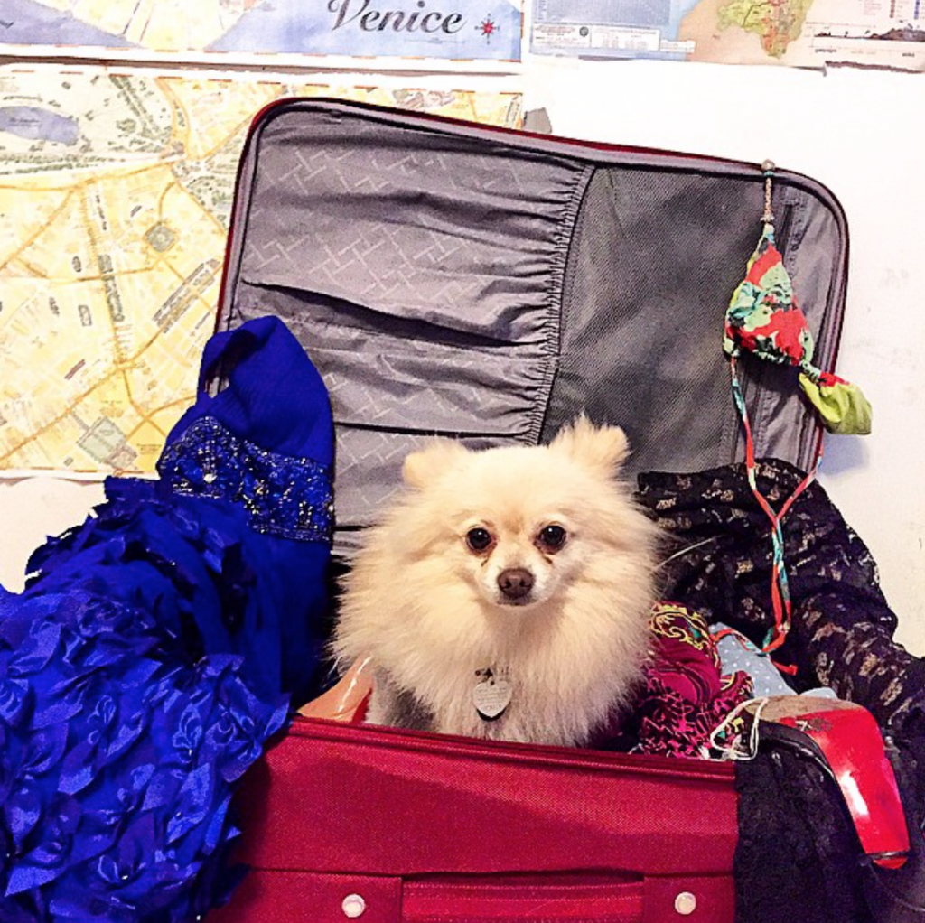 Your pet will spend most of its travel time inside its carrier, so make the carrier comfortable!
