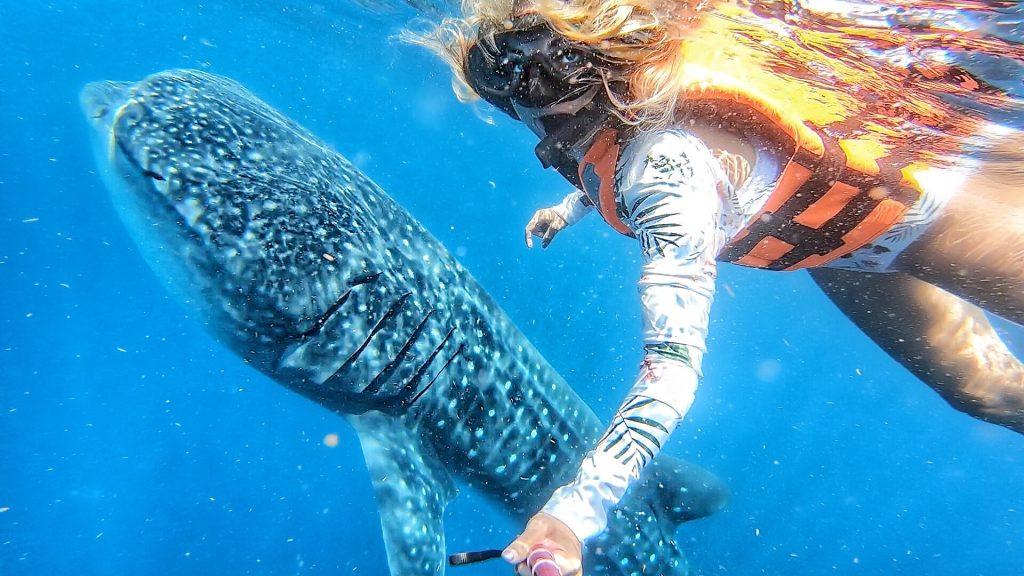 tubarão-baleia méxico
